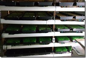 DIY Barley Fodder Mat Grow System